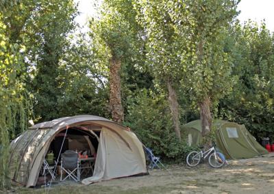 Les toiles de tentes sous le saule pleureur