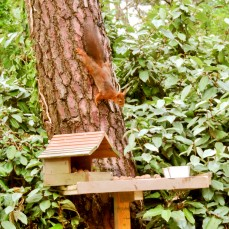 Cabane à écureuil