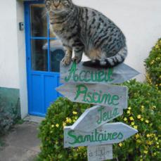 L'accueil par les chats