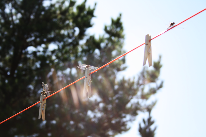 Les libellules sur le fil à linge des campeurs