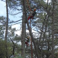 2 climbing pruners