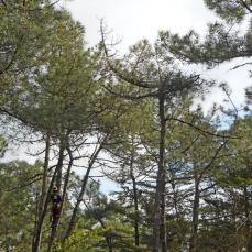 3 climbing pruners